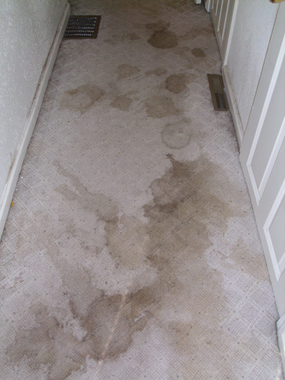 hallway with grungy stained carpet Before & after photos